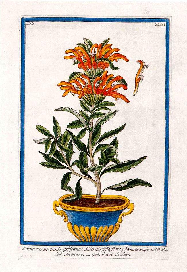 El jard n bot nico nace de la necesidad del hombre de for Jardin botanico ucm