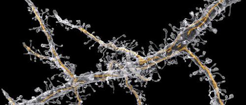 Biomedicina para las rupturas en las conexiones del cerebro