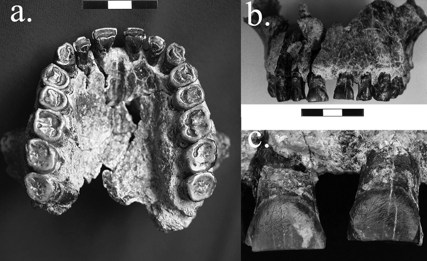Foto blog dientes fósiles